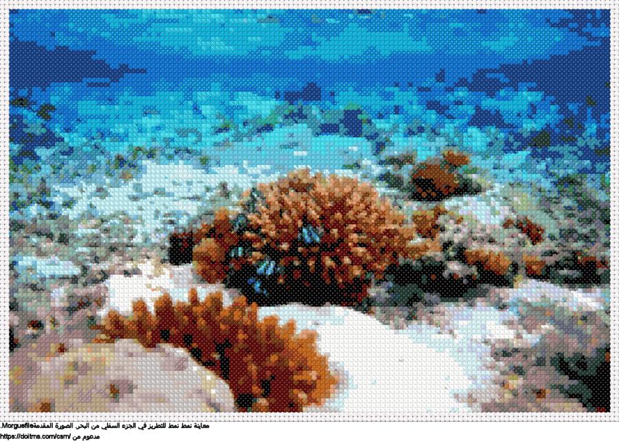 .الشعب المرجانيةنمط عبر خياطة ل