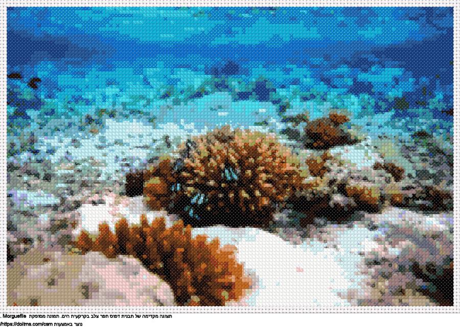 אלמוג