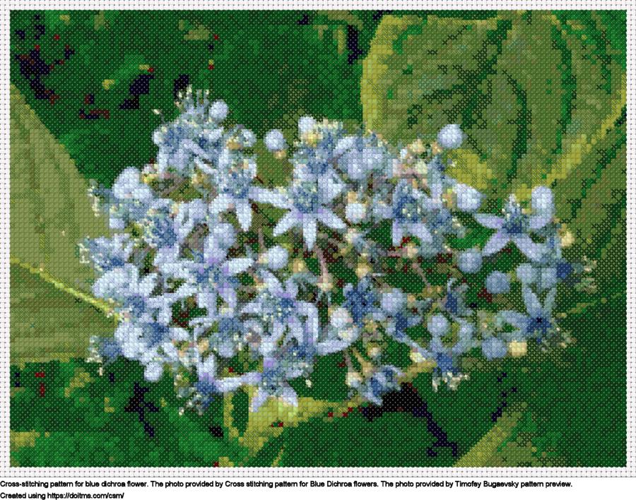 Blue Dichroa Flower