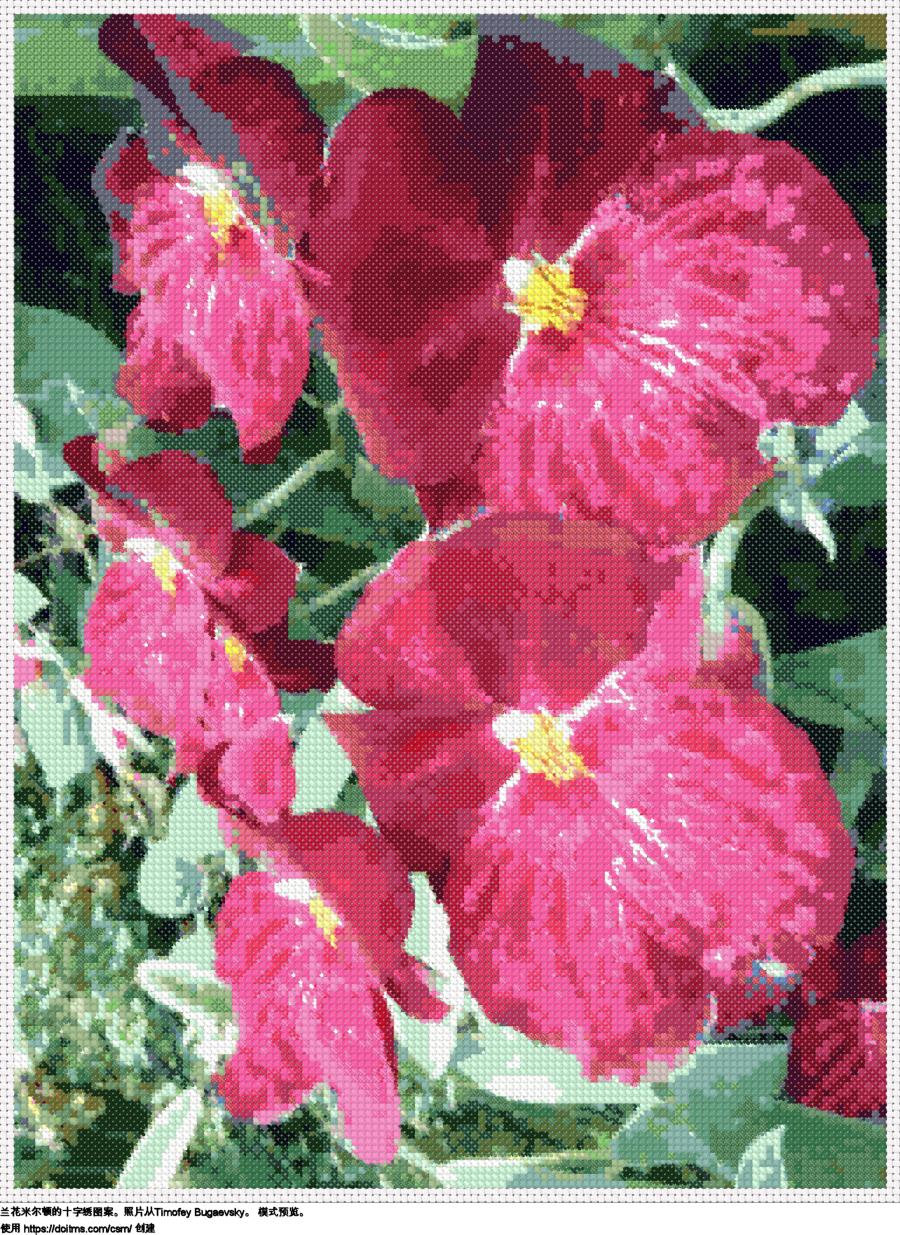 免费 花卉 十字绣设计