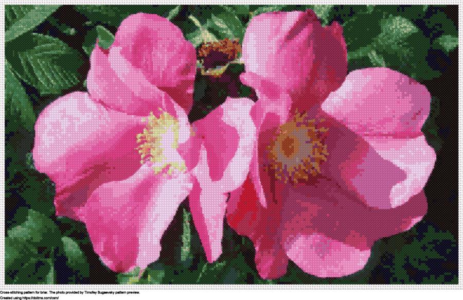 Free Briar cross-stitching design