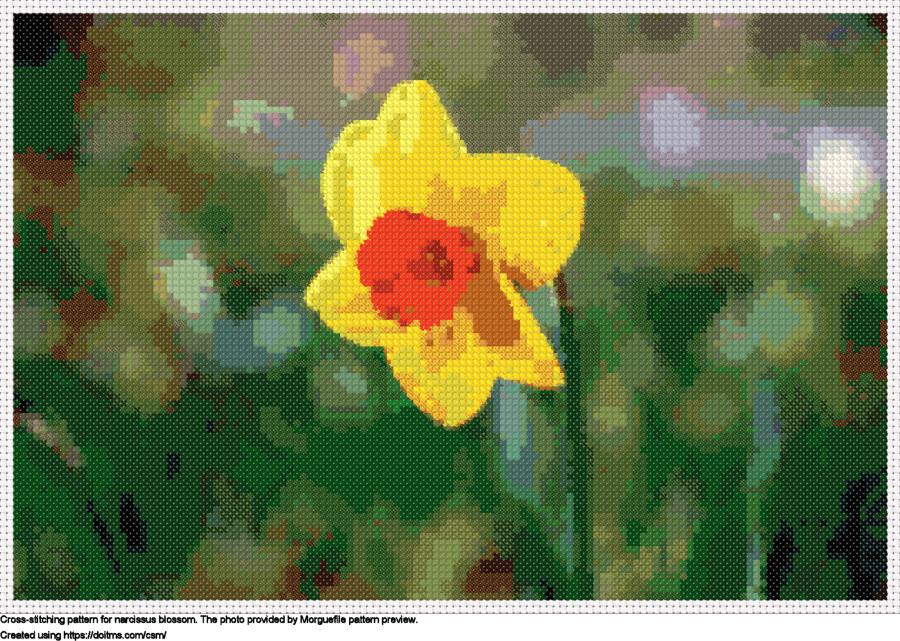 Free Narcissus blossom cross-stitching design