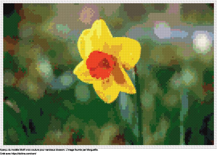 Motif de point de croix Narcissus blossom gratuit