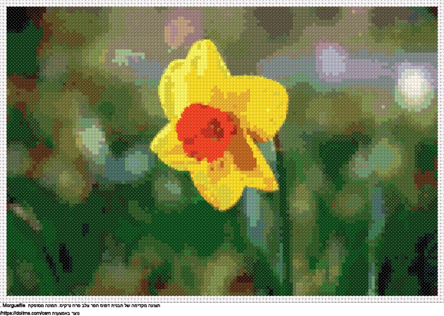 פרח נרקיס