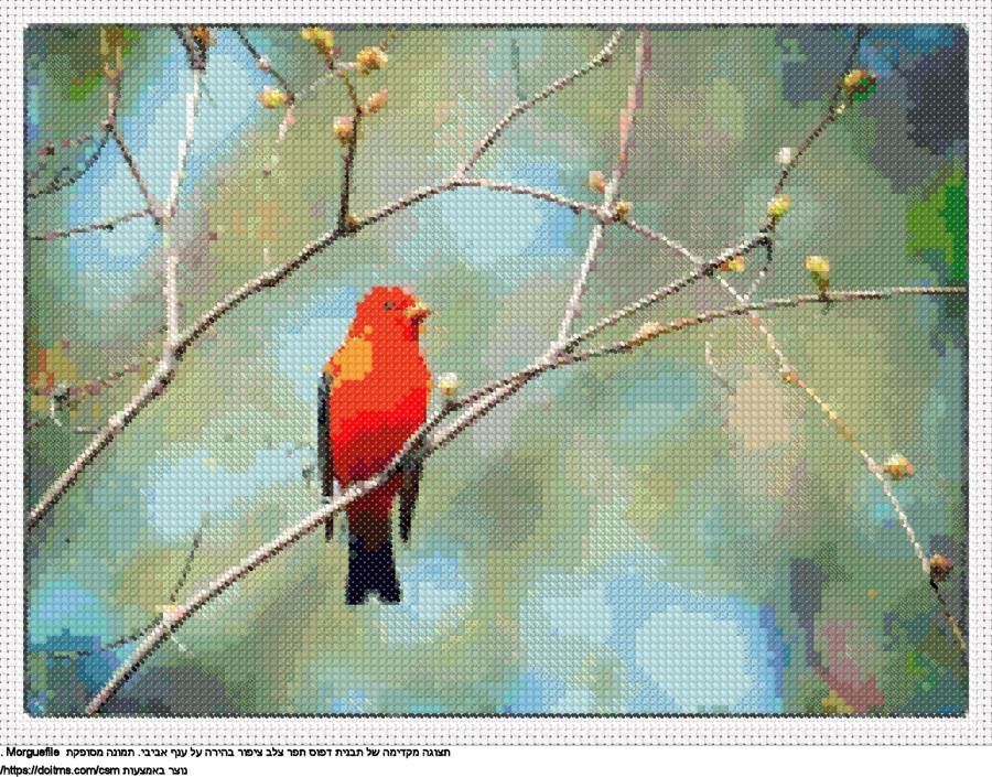 ציפור קטנה