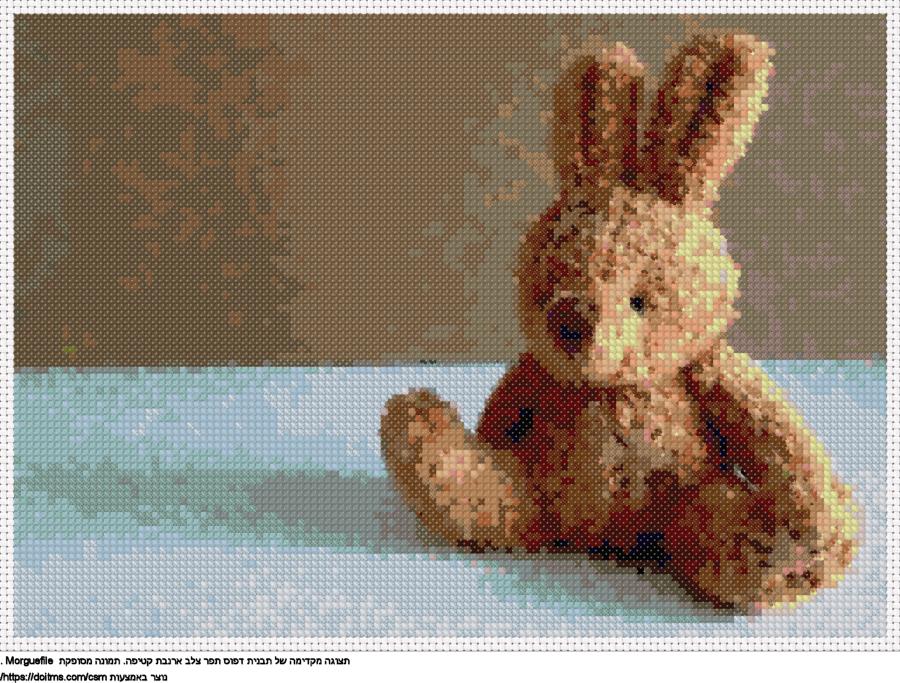 ארנבת קטיפה