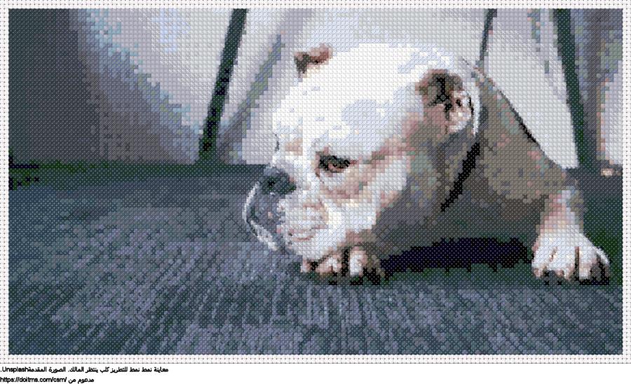 .كلب البلدغنمط عبر خياطة ل