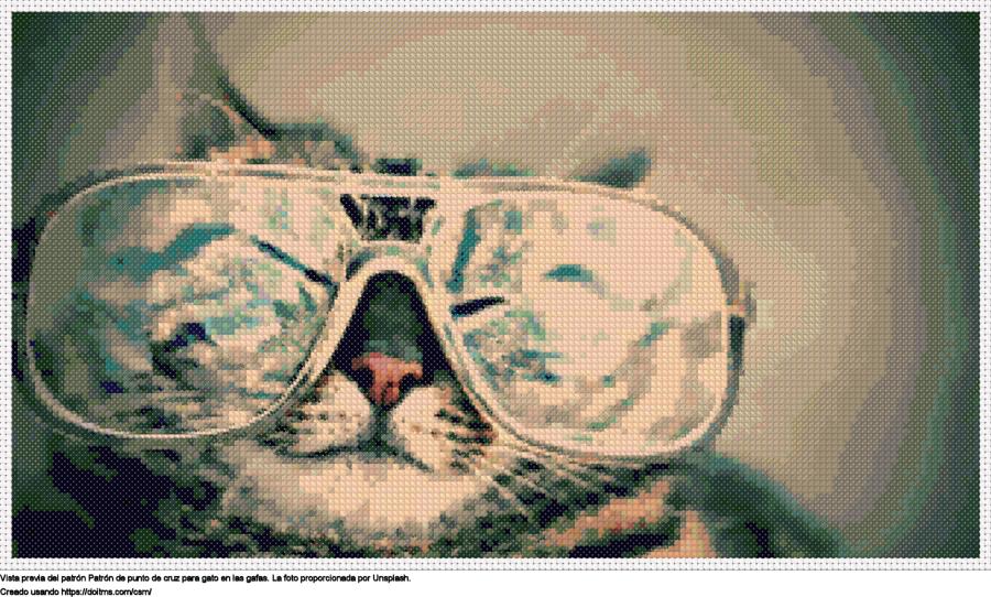 Gato en las gafas