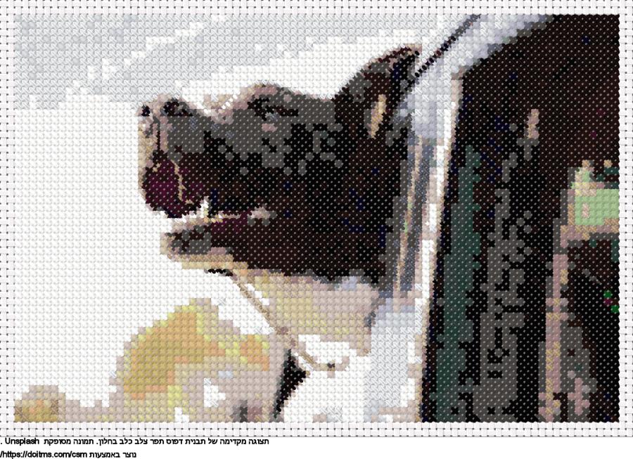 כלב בחלון