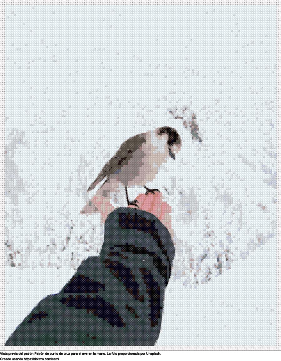El ave en la mano