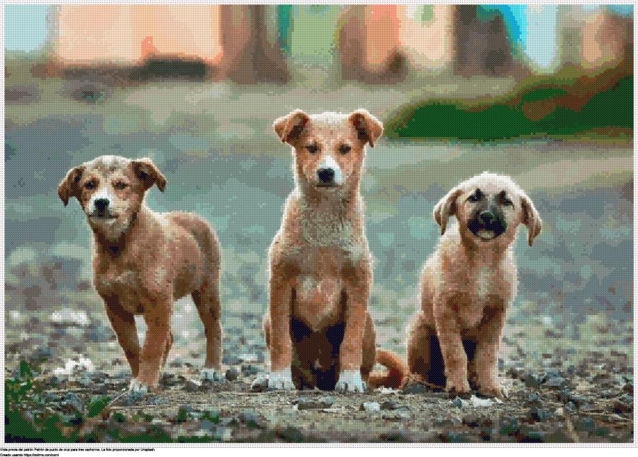 tres cachorros