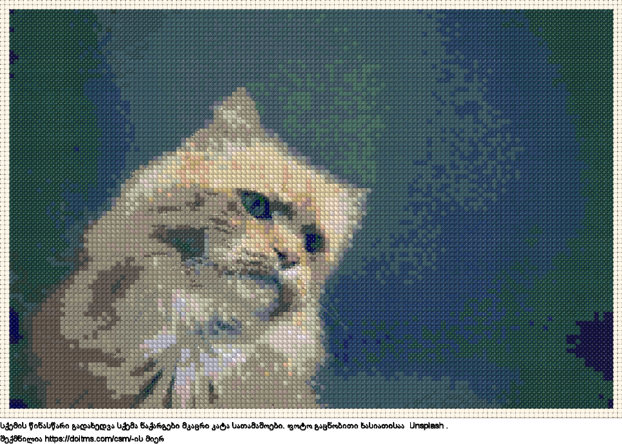 მკაცრი კატა