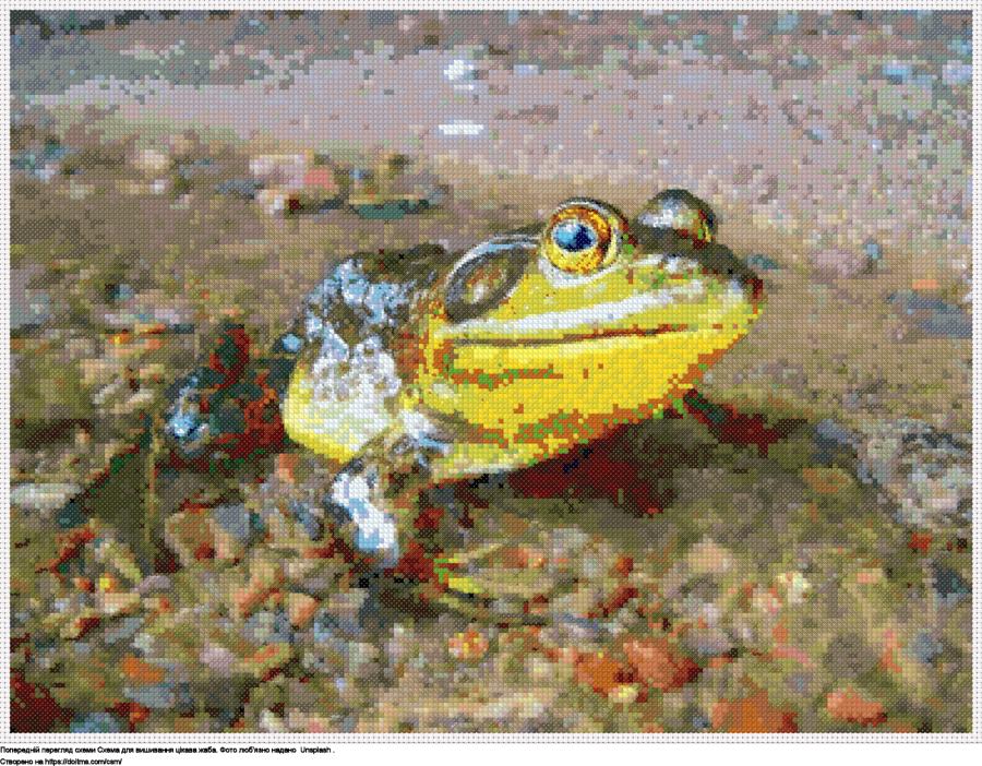 цікава жаба
