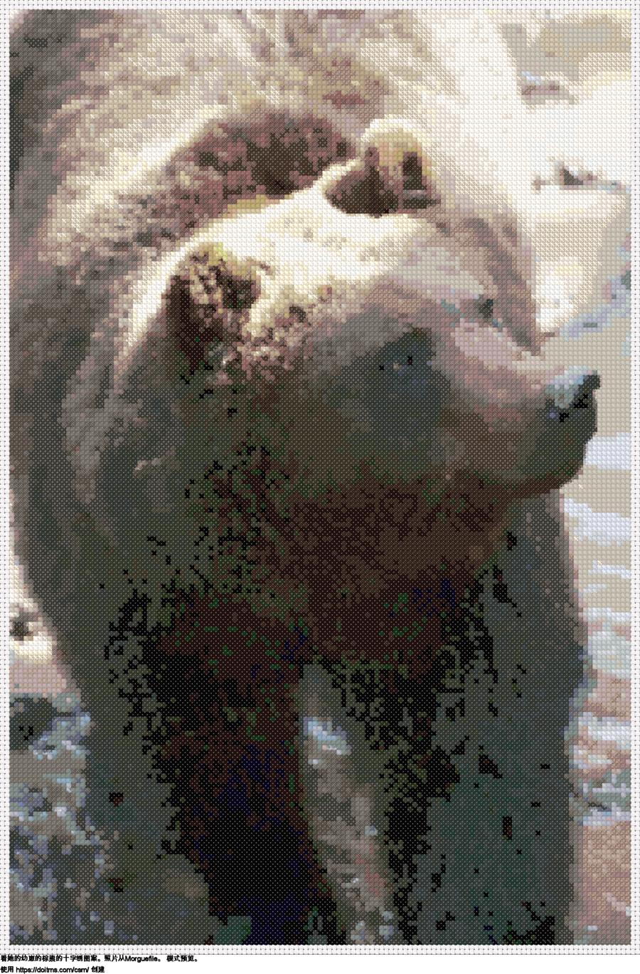 免费 熊 十字绣设计