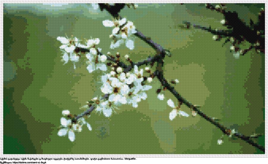 ალუბლის ყვავილები